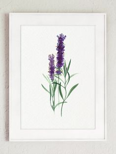 Kitchen Herbs Botanical Natural Gift Set of 12 Giclee Fine Art Print, Organic Herb Garden Kit, Lavender Flower Buds, Chamomile Flower Poster - All About Decoration Purple Wall Decor, Green Wall Art, Watercolor Cards, Watercolor Flowers, Watercolor Paintings, Painting Wallpaper, Painting Abstract, Watercolour, Art Mural Vert