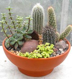 Vamos a ver cómo montar un mini jardín de suculentas en un recipiente ancho y plano que les permite lucirse en todo su esplendor