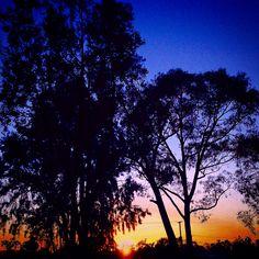 ❤️ A Little Less Conversation #sunset #elvis #action #heart #bite #bark #California #sfo #tree #sky #blue #purple