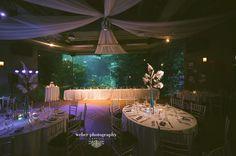 Florida Aquarium Wedding | Destination Wedding Photography Weber Photography Blog