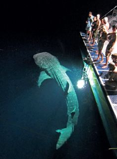 night whale - Google Search