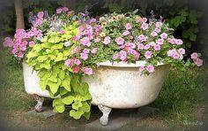 Flower Garden in a Bathtub Garden Decor