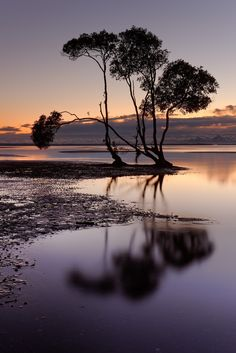 reflected mangrove by Robert Charity on 500px