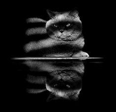 Fotografie: Coole Katzen in Schwarz-Weiß   KlonBlog