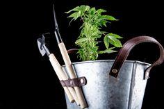 Legalny rynek marihuany w USA wzrośnie trzykrotnie do 2021 roku