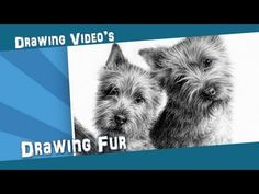 How to draw a realistic dog nose with graphite - Drawing tutorial Painting Fur, Painting & Drawing, Drawing Fur, Drawing Lessons, Drawing Techniques, Drawing Ideas, Drawing Tips, Amazing Drawings, Realistic Drawings