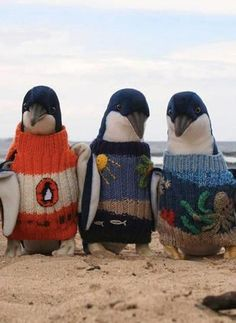 Penguins in penguin sweaters!