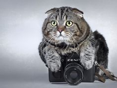 Cat With Zenit Camera