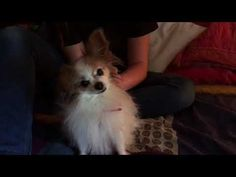 ZORA gives kisses 016 - YouTube Nun, Animals And Pets, Kisses, Corgi, Youtube, Pets, Corgis, The Kiss, Kiss