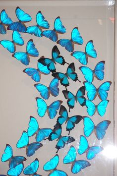 Image detail for -Worlds Most Beautiful Butterflies In One Look - The Wastetime Post Morpho Butterfly, Blue Morpho, Butterfly Crafts, Butterfly Wings, Most Beautiful Butterfly, Butterfly Painting, Blue Butterfly Wallpaper, Butterfly Pictures, Dragonfly Art