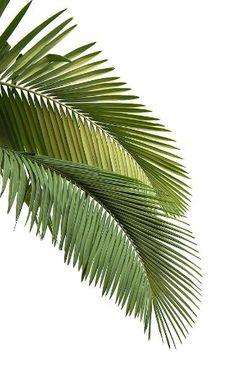 an island ᶜᴼᵀᵀᴬᴳᴱ Palm Tree Sunset, Palm Trees, Tropical Vibes, Tropical Flowers, Tropical Houses, Tropical Paradise, Southern Greens, Southern California Beaches, Plants