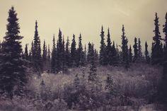 Flashes of Style   Yukon