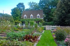 The Organic Gardener :: Garden gallery :: Home gardens