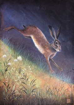 Jemima Jameson ~ Downhill Dash I wonder how this is done. The texture within the night sky, the fine blades of grass in lighter shades. Surely not possible in watercolour alone? Art And Illustration, Illustrations, Hare Pictures, Bunny Art, Bunny Bunny, Rabbit Art, Woodland Animals, Pet Birds, Fantasy Art