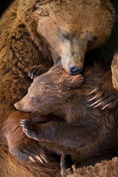 Mama Bear and Cub. THINGS IN LIFE. #nature Sydney Digital Marketing