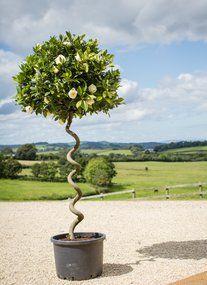 Bay Tree Hire