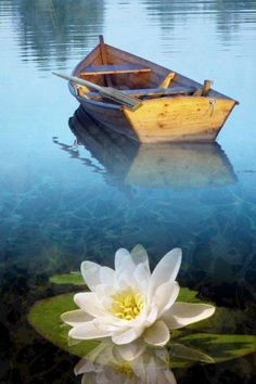 Boat with Lotus