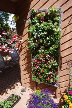 my living wall 2014 Living Walls, Plants, Plant, Planets