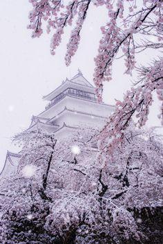 Aizuwakamatsu Castle ~Cherry tree in full bloom covered in snow, Fukushima, Japan