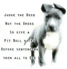 IJS #pitbull