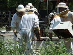 Early American colonists brought bees to America. Since then, beekeeping has thrived in America. Read more here!