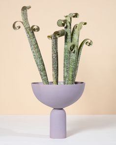 Caudex, a project that combines handmade ceramic planters with rare and unusual plants. Handmade Ceramic Planters, Ceramics, Lilac, Handmade Ceramics, White Clay, White Planters, Clay Planters, Unusual Plants, Water Lighting