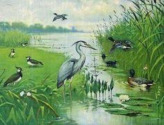 Botanical Illustration, Book Illustration, Early Childhood Centre, John James Audubon, Vintage School, Dutch Painters, Montessori Activities, Naive Art, Fauna