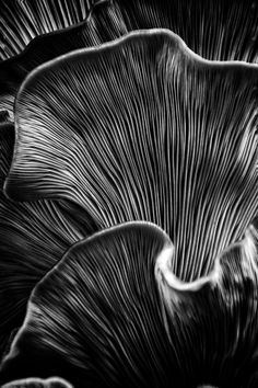 Natural Structures, Natural Forms, Patterns In Nature, Textures Patterns, Abstract Photography, Macro Photography, Mushroom Art, Black N White Images, Jolie Photo