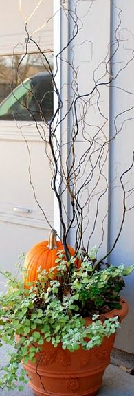 licorice plant + pumpkin from garden + curly willow from backyard = inexpensive and rugged fall planting