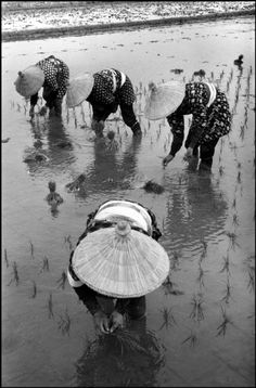 Planting rice. 1961, Japan. © Rene Burri/Magnum Photos