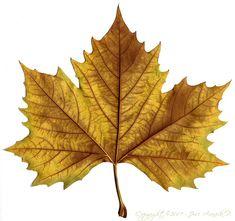 Muitas opções estão disponíveis para decorar as folhas. Você pode simplesmente branquear, ou tingi-los com tinta diluída em tons naturais, como lilás, verde, sépia ou rosa empoeirado, e depois montá-los no papel, em cores complementares.