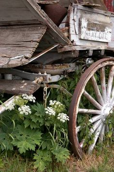 """Wagon Wheel Flowers"" by Kat Bonson"