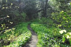 Spring and summer are great times to take a hike!