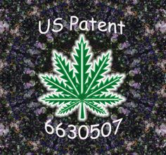 The U.S. government owns a patent on marijuana compounds  Definitively hypocritical, and a sign that the government knows it's lying and eventually wants the monopoly over cannabis as a medicine, the feds have patented multiple cannabis compounds, and cannabis-related pharmaceutical drugs. One such patent is for cannabis to be used as an antioxidant and neuroprotectant.