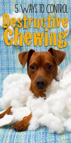 Control destructive chewing