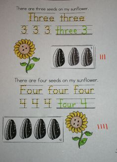 Free sunflower seed easy reader booklet. Students trace & write the number & number word, draw that many seeds on the sunflower, cut & glue the group/set of seeds to the matching numbered box & tally mark that many. 2 other free sunflower booklets also available + craftivities.