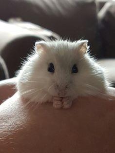 Hamster!  Love♡