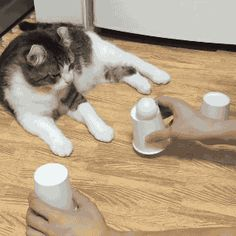 """Share this """"Genius cat"""" animated gif image with everyone. Gif4Share is best source of Funny GIFs, Cats GIFs, Dog GIFs to Share on social networks and chat."""