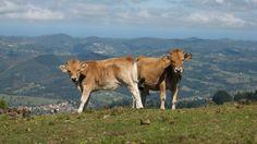 ¿Qué te parece si tus próximas vacaciones las dedicas a conocer Asturias? Se trata del destino idóneo para viajar en familia en primavera. Conoce con BungalowsClub los lugares naturales más atractivos de la zona y dónde poder alojarte para disfrutar de tus vacaciones al máximo