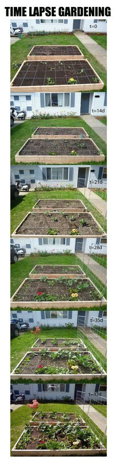 Time Lapse Square Foot Gardening