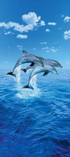 Three Dolphins Wall Mural