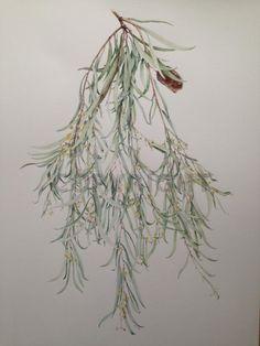 2014 Entries | Canberra Botanical