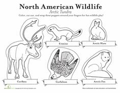 Kindergarten Plants, Animals the Earth Paper Projects Worksheets: Arctic Animals Finger Puppets Worksheet North American Animals, Canadian Animals, Artic Animals, Arctic Tundra, Earth And Space Science, Animal Habitats, Finger Puppets, Activities, Cultural Studies