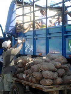 Cassava Delivery Truck, Ghana. Photo: IFPRI-IMAGES, via Flickr