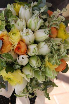 tulip and ranunculus