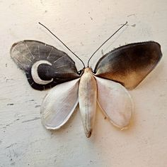 Fabric moth with moon pattern by Mister Finch
