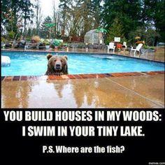 Bear in the swimming pool