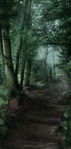 Mixed Forest Path – – Famous Last Words Forest Path, Deep Forest, Foggy Forest, Forest Trail, Misty Forest, Forest Road, Magic Forest, Foto Nature, Landscape Photography