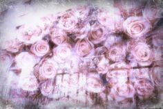 a mixed media image of roses & lilacs by alice saga, the faerie tales of violette #doubleexposure #fineart #photography #lilacs #roses #pink #violet
