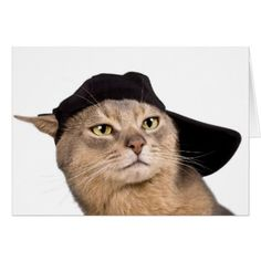 Abyssinian Cool Cap Cat Card - cat cats kitten kitty pet love pussy